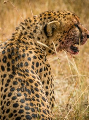 African Safari Trips | Best safari in africa Travel & Trips Packages